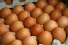 Продам яйцо столовое СО С1 от 360 шт