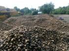 реалізуємо товарну картоплю