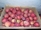 Продам яблоки чистые без парши из своего сада. Урожай 2017 года!!!