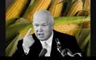 Закупаем кукурузу б/н