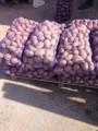 Продам домашний картофель 20 т