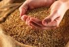 * ѕредпри¤тие закупает зерновые *