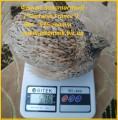 яйца инкубационные дл¤ маточного стада перепелов.