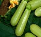 куплю,закуплю,ищу производителей овощей