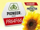 Соняшник Піонер ПР64Ф66 (CRU,Туреччина) стійкий до нових рас вовчка
