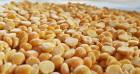 Купляємо зерно гороху жовтого