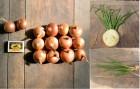 Продам лук оптом на зеленое перо