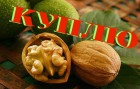 купим грецкий орех кругляк и чищенный,орех лесной лещину