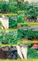 """Предлагаем  семена зелени от тм """"Eco-semena"""" оптом"""