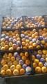 Продам мандарины