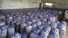 Продам чеснок Любаша 4+ цена 25 грн 1 кг.