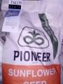 Подсолнечник . кукуруза семена . Распродажа - Превью изображения 4