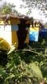 Продам пчелосемьи, Харківська обл. http://agro-ukraine.com Подробнее: