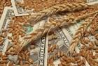 Закупаем сою, кукурузу в любом качестве и объеме