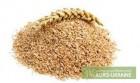 Купую пшеницю проблемну і продовольчу, відходи пшениці