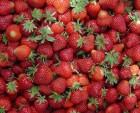 Куплю ягоди (клубника, полуниця)