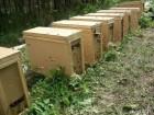 Продам пчелопакеты карпатка.