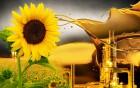 Китайская компания купит масло подсолнечное крупный опт