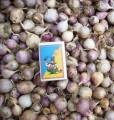 Однозубка (однодоля, однозубок) элитные семена чеснока