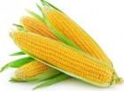 «акупаЇм кукурудзу по безгот≥вковому розрахунку (в т.ч. без ѕƒ¬)