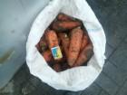 """Продам оптом морковь сорта """"Романс"""" и """"Абако"""" от произво..."""
