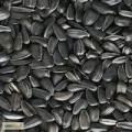 «акупаем подсолнечник масличный.