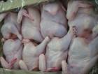 Поставка курицы и суб. продуктов. От производителя. ОПТ.