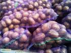Картофель 5+ Ривьера цена : 3 грн. кг. с писка отобранная, Одесская