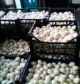 Продам грибы Шампиньоны оптом свежие