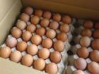 Закупаем свежые яйца оптом самовывоз