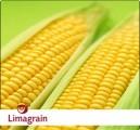 Продам семена кукурузы (Лимагрейн) по хорошей цене! Оригинал
