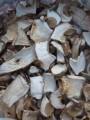 —ухие грибы