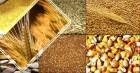Пшеница, кукуруза, подсолнечник, жмых, отруби пш.