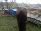 Продам жеребця 1 рік 5 місяців великих коней