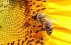 Предприятие закупает мёд подсолнечника нового урожая!