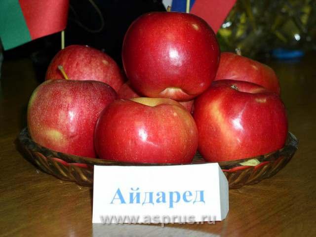 продам яблука спартан, айдаред, джонаголд, симиренка, ріхард - Изображение 6