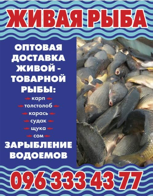 куплю рыбу толстолоб оптом