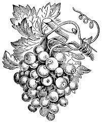 Виноградная чача - Изображение 3