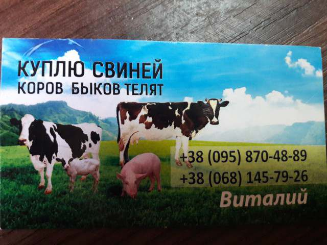 Куплю свиней, коров, быков, телят. В любых количествах. - Изображение 1