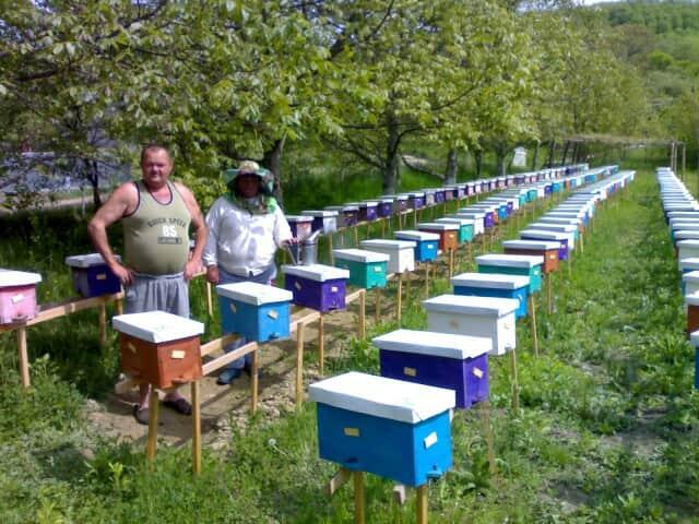 Продам бджоломатки карпатки приймаю замовлення на весну 2019 - Изображение 1