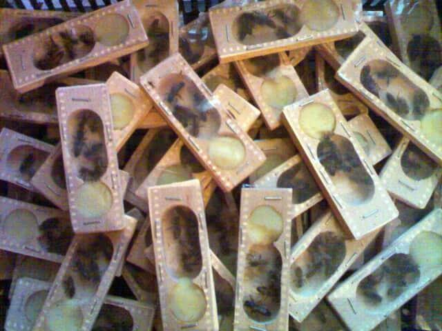 Продам бджоломатки карпатки приймаю замовлення на весну 2019 - Изображение 4