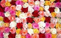 Минеральное органическое удобрение гумат калия AGRO для роз - Изображение 1