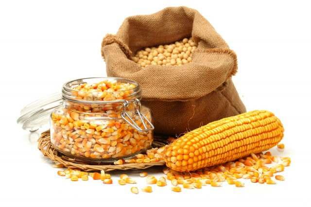 Закупаем на постоянной основе кукурузу, дорого! - Изображение 1