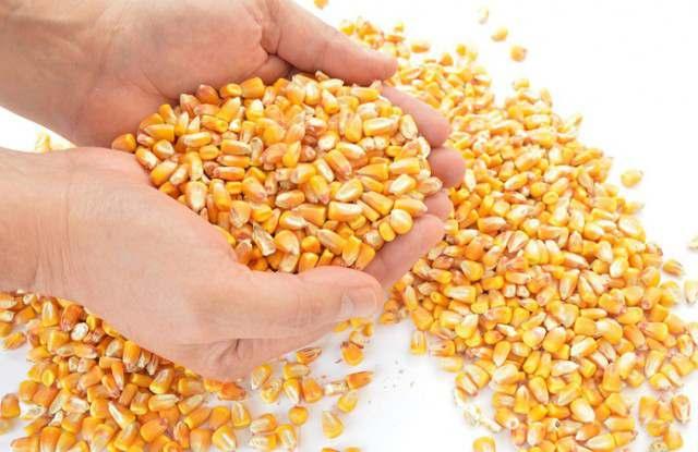 Кукуруза на элеваторе цены элеватор ростов на дону официальный сайт цены