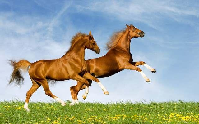 Премикс для Лошадей Коней - Изображение 2