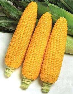 Крупно-оптовая закупка с/х продукции. Кукуруза урожай 2017! - Изображение 1