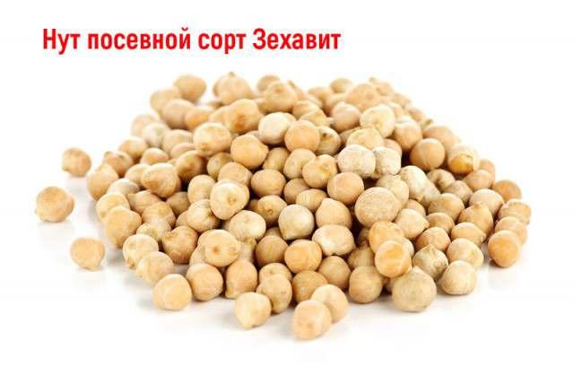 Семена Нута Зехавит элита (Израиль) - Изображение 1