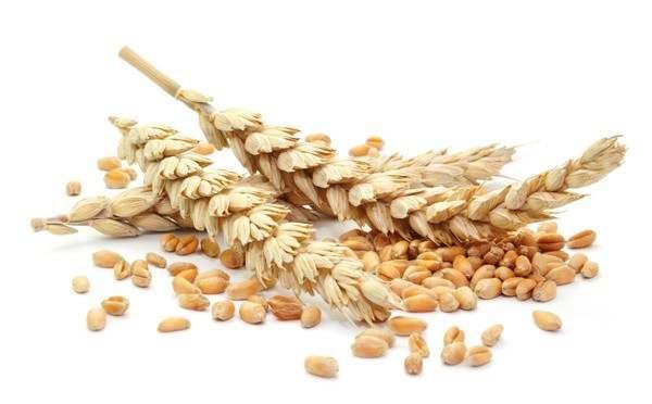 Пшеница 4, 5, 6 кл. - Изображение 1