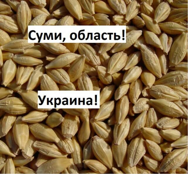 Куплю Ячмень Сумы, Цена договорная - Сумы. Объявления на agrotender ... 2d480ecb17b