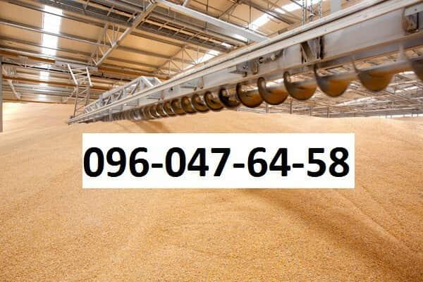 Куплю Пшеницу Сумы Украина, Цена договорная - Сумы. Объявления на ... 01d58f47160